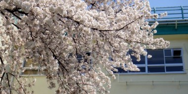 校舎と桜と入学前フレンド文化